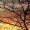 Um método eficaz para reflorestar a Caatinga
